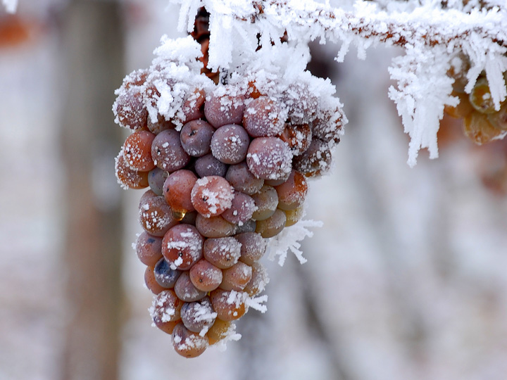 ice-wine-eiswine