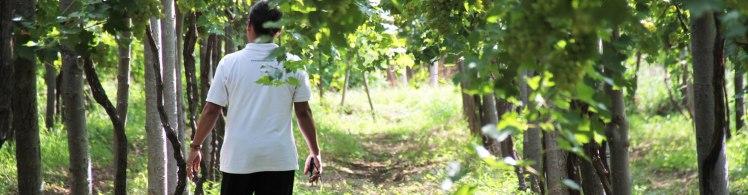 hwines-vineyards2